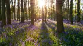 £5 million to create and restore woodlands
