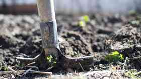 Tree planting rates to treble by end of this Parliament