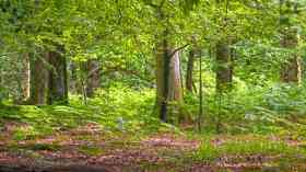 National Trust pledges 20m new trees in next decade