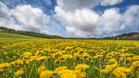 Councils failing to protect countryside, CPRE warns