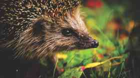 House builders ordered to protect wildlife