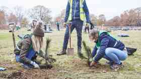 Trees – a vital link in urban stormwater management