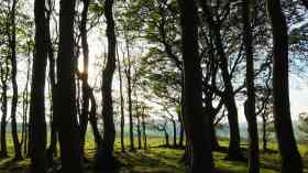 Free trees encouragement in Leicestershire