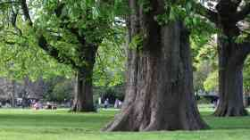 55,000 free trees up for grabs in London