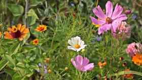 Coronavirus likely to boost UK's rare wildflowers